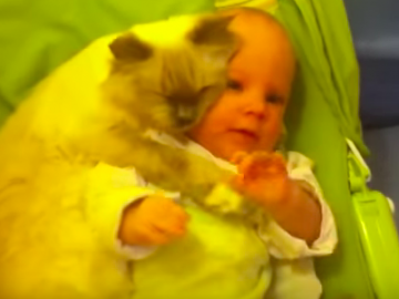katzen und babys