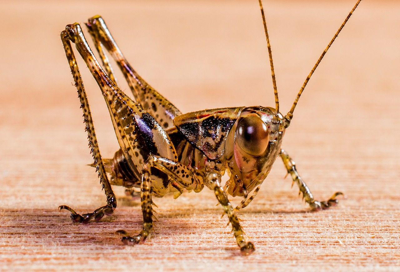 insekten hundefutter