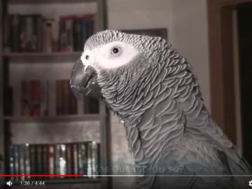 papagei spricht